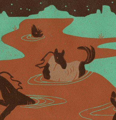 Wildish Podcast: Australia's wild horse conundrum parallels the West's