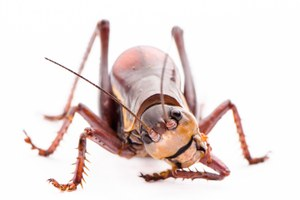 Focusing in on arthropods of the West