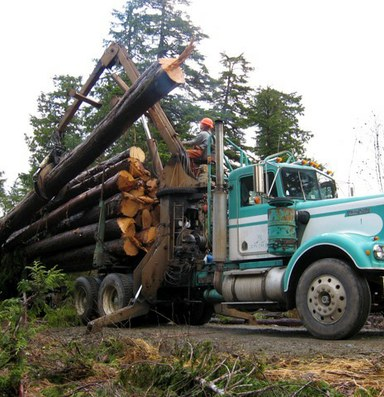 The Forest Service bets on second-growth logging in Alaska
