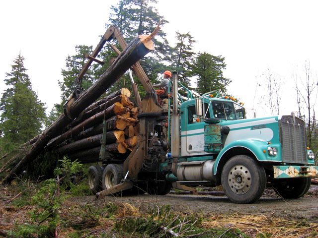 The Forest Service Bets On Second Growth Logging In Alaska