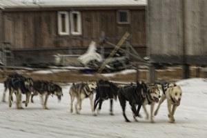 This year's weird Alaska winter should make us very, very nervous.
