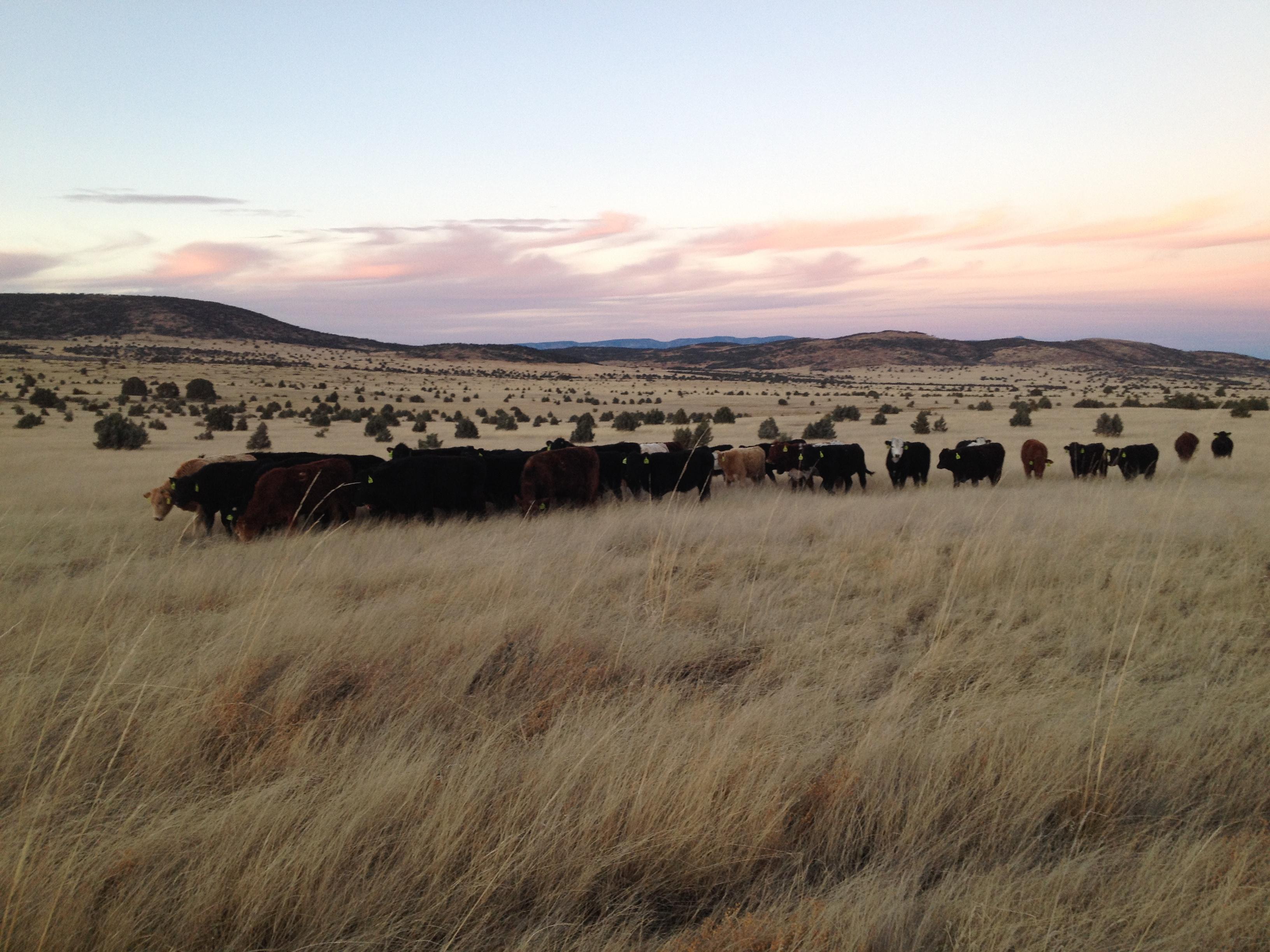 cattle-ranches-hand-job-in-arizona-remote-control-clitoris-stimulator