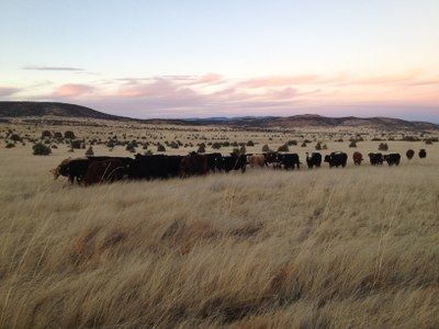 Ranch Diaries: A New Mexico cattle company is born