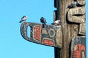 Activists want to remove Seattle's iconic totem poles