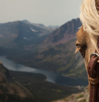 'Unbranded' character responds to accusation of 'mustang neglect'