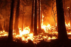 Wildfire in the West has become an uncontrollable force