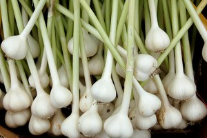 Why I'm fighting foreign garlic growers and their U.S. allies