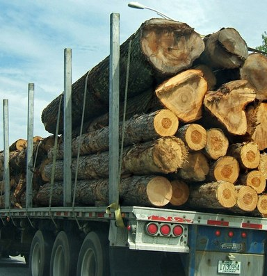 Why is logging dying? Blame the market.