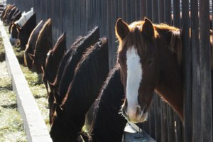 It's time to come to terms with euthanizing wild horses
