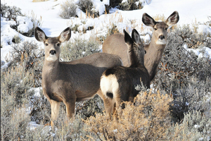 Go behind the scenes of wildlife science