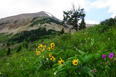 A Montana bill takes aim at wilderness study areas