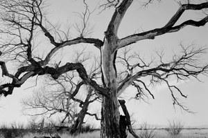 Wilderness Photographer