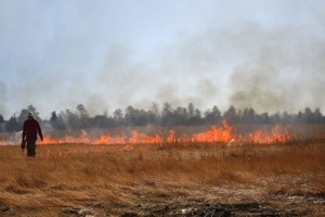 After a wet winter, will Colorado forest managers increase prescribed burns?