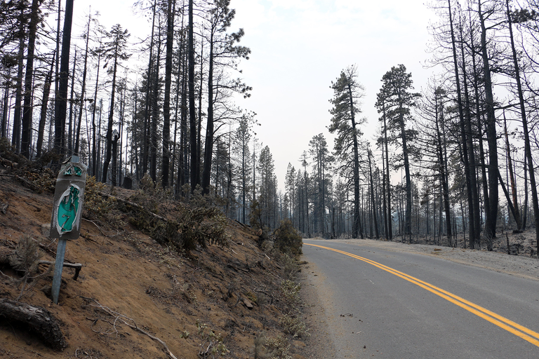 Oregon's Milli Fire burn area