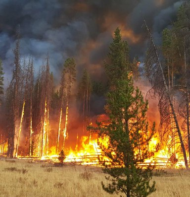 The West's dramatic wildfire season, explained
