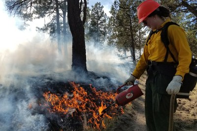 Western forests have a 'fire debt' problem