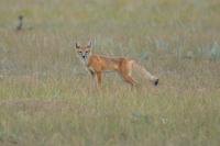 'Cyanide bombs' use reauthorized to kill wild animals