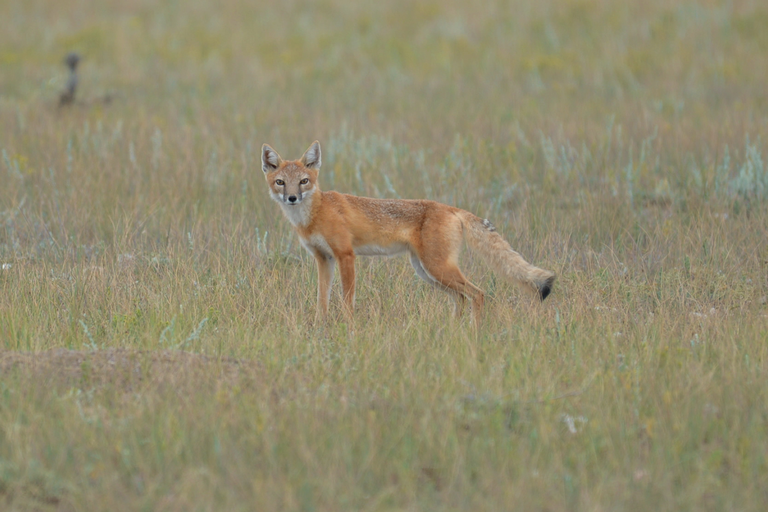 Cyanide bombs' use reauthorized to kill wild animals — High