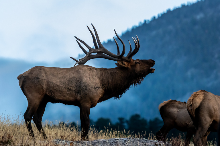 Hiking trails are a path to destruction for Colorado elk