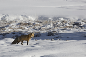 How human noise pollution is disrupting wild places