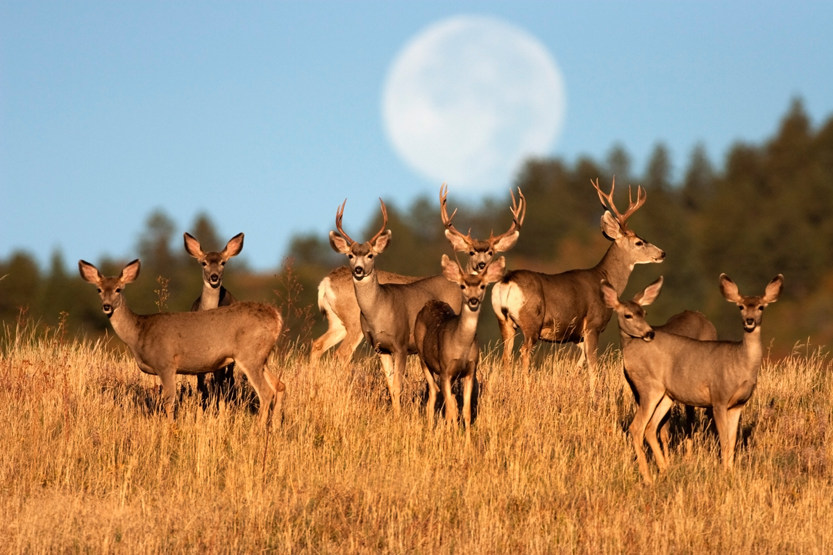 The Disease Devastating Deer Herds May Also Threaten Human Health High Country News Know The West