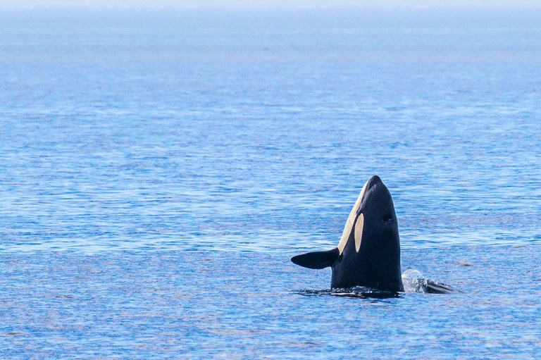 The impermanence of wonder and whales
