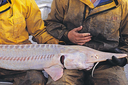 Will a dam save the pallid sturgeon, or doom it?