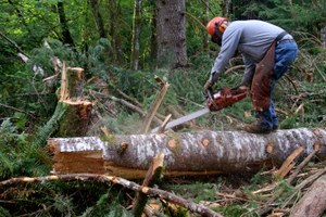 Will the Northwest Forest Plan come undone?