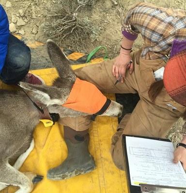 Wyoming seeks compromise on wildlife migration corridors