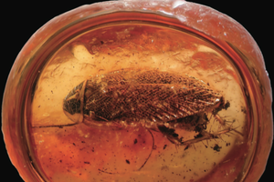 49-million-year-old cockroach fossils discovered in Colorado