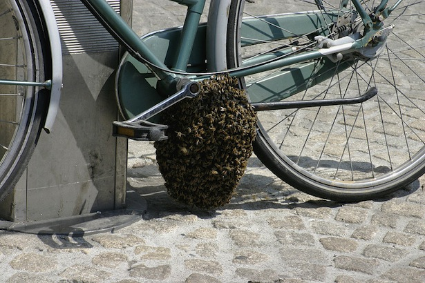 bee swarm on a bicycle