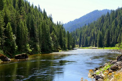 The Lochsa River in the Nez Perce-Clearwater National Forest. Courtesy Forest Service Northern Region