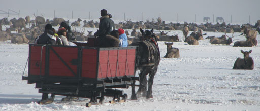 Sleigh ride at National Elk Refuge
