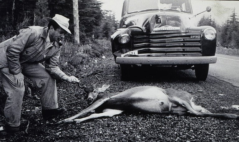 Roadkill_in_the_1950s.jpg