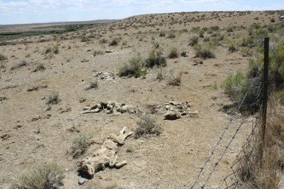 Coyote holocaust