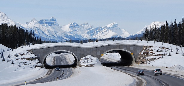 Banff Wildlife Overpass