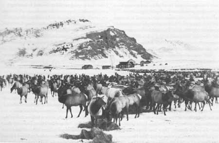 The National Elk Refuge