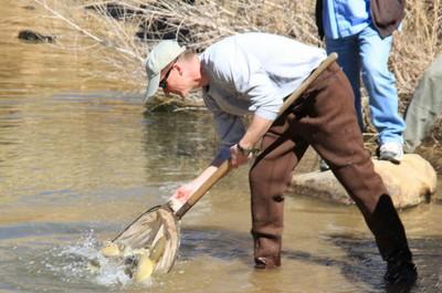 Gila trout release