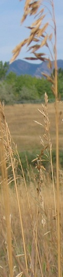 USFWS tallgrass, cropped
