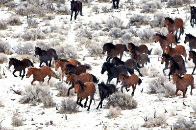 Wild Horses To The Slaughter High Country News