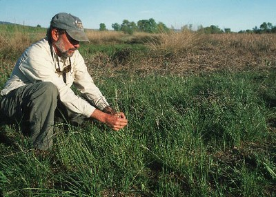 Yolo County farmer with native grass