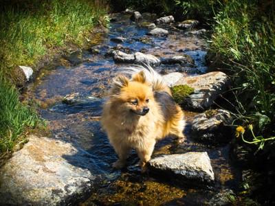 Daisy stream