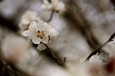 Spring Below