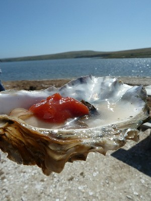 Oyster and ocean