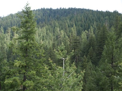 Shasta-Trinity National Forest Reserve slated for logging