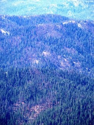 Natural Fire - Yolla Bolly Wilderness