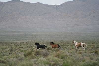 Snake Valley Mustangs