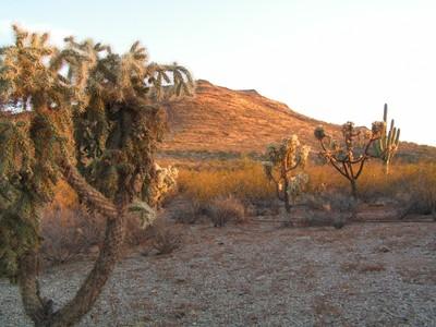 Sonoran desert dry