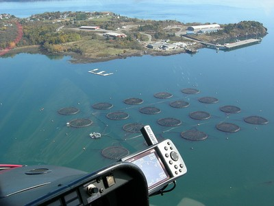 Maine salmon farm