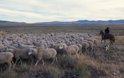 Sheepstation